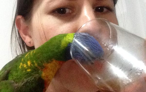 The Bird Drinker