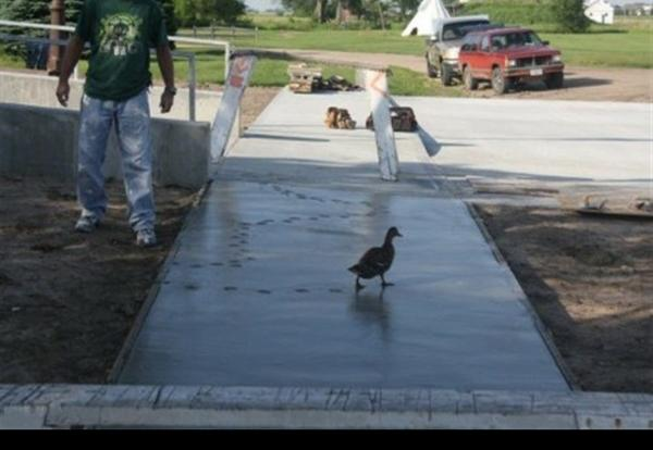 Duck-of-the-Walk