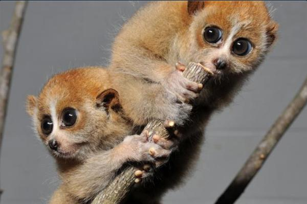 10 Cutest Animal Species You May Not Know About