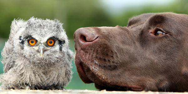 10 Animal Odd Couples - Interspecies Friends